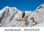 alpine ibex in the mountains on ... | Shutterstock . vector #542119225