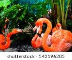 Beautiful Flamingos In The Par...