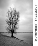 A Scenic View Of A Lone Tree O...