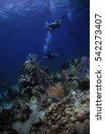 divers exploring the reef in... | Shutterstock . vector #542273407