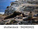 sea lions on the rock | Shutterstock . vector #542403421