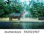 belin zoo | Shutterstock . vector #542421967