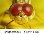 Stock photo extreme macro shot eye of dragonfly in wild close up detail of eye dragonfly is very small 542441431