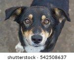 dog eyes friendship | Shutterstock . vector #542508637