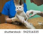 veterinary placing a catheter... | Shutterstock . vector #542516335