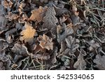 Frozen Leaves On The Ground. ...