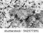 beautiful flower background | Shutterstock . vector #542577391