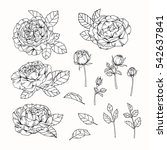 vector collection set of rose... | Shutterstock .eps vector #542637841