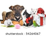 Stock photo different animals with giftbox and flower together 54264067