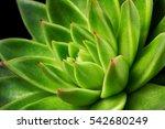 close up of succulent echeveria.... | Shutterstock . vector #542680249