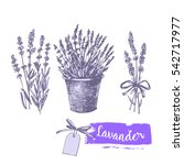 graphic lavender set.... | Shutterstock .eps vector #542717977