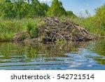 sticks of a european beaver ...   Shutterstock . vector #542721514