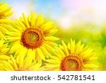 bright colorful flowers... | Shutterstock . vector #542781541