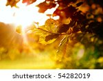 colorful leaves with sunbeam | Shutterstock . vector #54282019