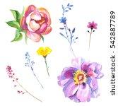 wildflower rose flower in a...   Shutterstock . vector #542887789