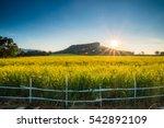 Beautiful Landscape Yellow...