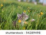 Stock photo little kitten walking in grass 54289498
