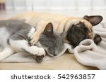 Stock photo adorable pug and cute cat lying together on plaid 542963857