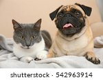 Stock photo adorable pug and cute cat lying together on sofa 542963914