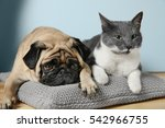 adorable pug and cute cat lying ... | Shutterstock . vector #542966755