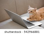 Stock photo cute cat with laptop on coach 542966881