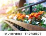 balcony flowers | Shutterstock . vector #542968879