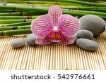 Orchid And Bamboo Grove With...