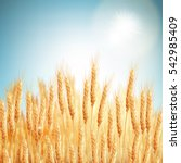 golden wheat field and sunny... | Shutterstock .eps vector #542985409