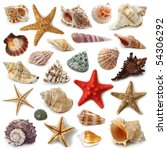 seashell collection isolated on ... | Shutterstock . vector #54306292