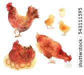 chicken hand drawn set in... | Shutterstock . vector #543111595