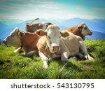 cow | Shutterstock . vector #543130795