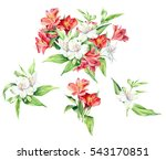 Stock photo set of watercolor flowers alstroemeria isolated on white background floral artistic collection 543170851