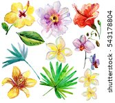 Set Of Tropical Flowers And...