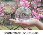 Glass Ball Display Pink Blosso...