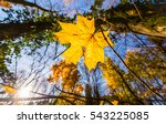 vibrant autumn colors on a... | Shutterstock . vector #543225085