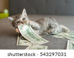 Stock photo gray kitten biting money 543297031