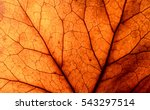 abstract leaf veins | Shutterstock . vector #543297514
