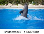 A Dolphin Doing Tricks In A Pool