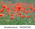 field of red poppies. | Shutterstock . vector #54334765