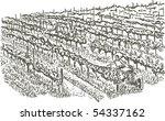 vineyards   hand drawing   Shutterstock .eps vector #54337162