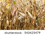 agricultural field  which... | Shutterstock . vector #543425479
