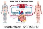 diagram showing blood flow of... | Shutterstock .eps vector #543458347