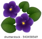 African Violet Flowers And...