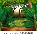 forest scene with lots of trees ... | Shutterstock .eps vector #543480709