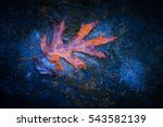image of an oak leaf covered in ... | Shutterstock . vector #543582139