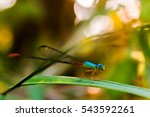 Dragonfly Catch Foliage...