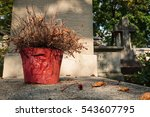 Dead Flower In Red Pot On...