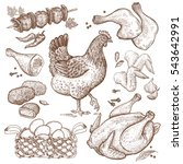 Bird And Food Objects. Sketch...
