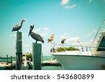 Toned Nautical Scene With...