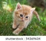 Stock photo cute red cat 54369634
